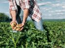 Was besagen die Bauernregeln im August 2020? (Foto)