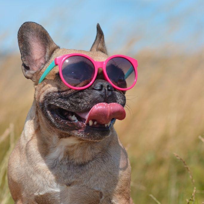Endlich Sommer! HIER sind bis zu 30 Grad drin (Foto)
