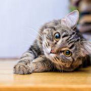 Horror-Fund! Katzen brutal gehäutet - sind auch Menschen in Gefahr? (Foto)