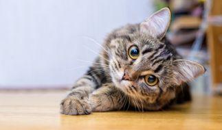In Graz wurden zwei gehäutete Katzen gefunden. (Symbolfoto) (Foto)