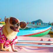 Kommt der Hitze-Hammer oder fallen die Hundstage dieses Jahr aus? (Foto)