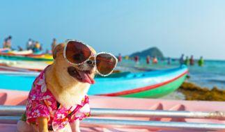 Fallen die Hundstage dieses Jahr aus? (Foto)