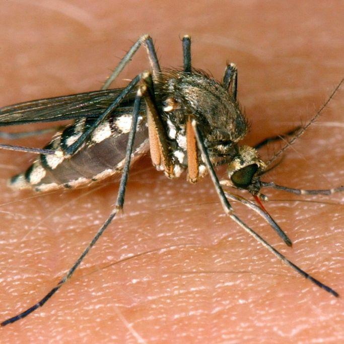 Achtung! Experten warnen vor tödlichen Infektionen (Foto)