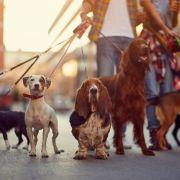 Hundefreundin (47) beim Gassigehen erwürgt (Foto)