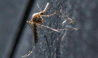 Mücken-Plage in Deutschland: Insekten breiten sich rasant aus. (Foto)