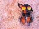 Ein Schwall Sahara-Hitze lässt Deutschland am Wochenende schwitzen. (Foto)