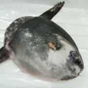 2 Meter großer Monsterfisch entdeckt! Ist DAS ein Alien? (Foto)