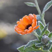 Frost? DIESES Wetter sagt der 100-jährige Kalender im August voraus (Foto)