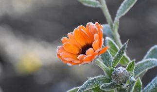Für den August 2020 sagt der 100-jährige Kalender Frost voraus. (Foto)