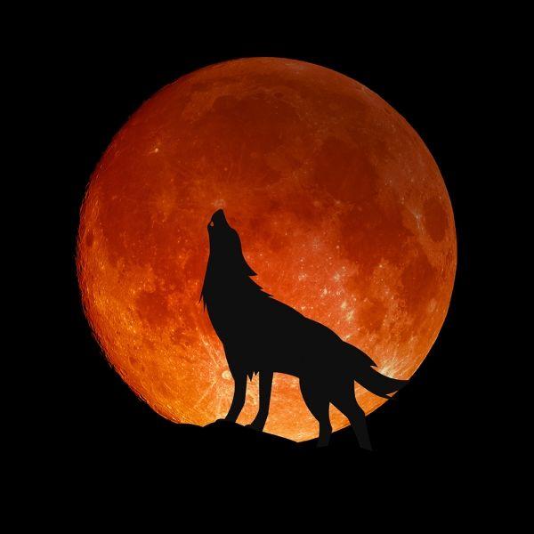 Roter Mond im August! Ein düsteres Omen für Astro-Fans? (Foto)