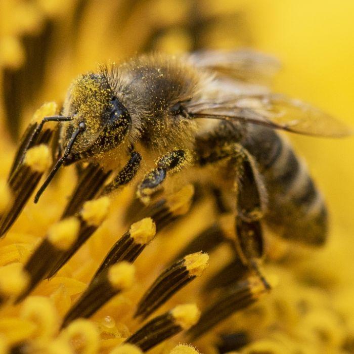 Vorsicht, tödlich! Lassen Sie sich nur nicht von DIESEM Insekt stechen (Foto)
