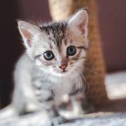 Jugendliche vergewaltigen Katze zu Tode (Foto)
