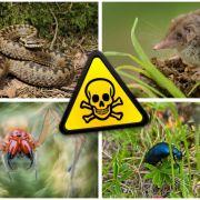 Das sind die giftigsten Biester in den Gärten Deutschlands (Foto)
