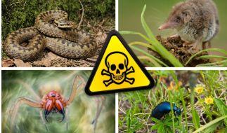 In deutschen Gärten tummeln sich einige giftige Tiere. (Foto)