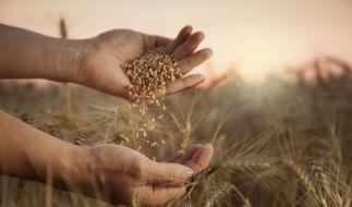 Was besagen die Bauernregeln im September 2020? (Foto)