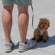 Haustierhaltung ab sofort illegal! DAS blüht Hunden in Nordkorea (Foto)
