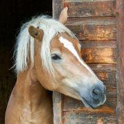 Perverser (42) missbraucht Pferd auf Galopprennbahn (Foto)