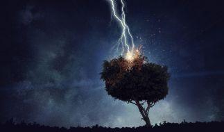 Das Wetter in der letzten Augustwoche wird teils stürmisch - der DWD warnt vor umstürzenden Bäumen. (Foto)