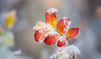 Laut Hundertjährigem Kalender soll der September eher trüb und kalt werden. (Foto)