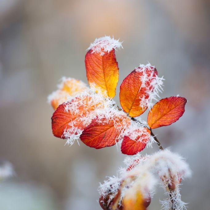Frost im September? Das sagt der 100-jährige Kalender voraus (Foto)