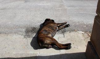 Der Hund starb an seinen schweren Verletzungen. (Foto)