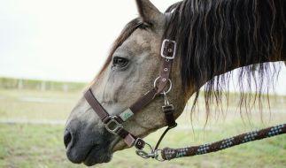 Unbekannte haben in Frankreich Pferde angegriffen. (Foto)