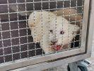 Nach einem Unfall auf der Autobahn A5 ist ein Löwenjunges aus einem Fahrzeug befreit worden. (Foto)
