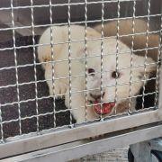 Happy End für Lea! Löwen-Baby zieht nach Spanien um (Foto)