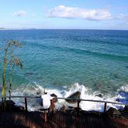 Raubfisch zerfleischt Surfer - Mann (46) gestorben (Foto)