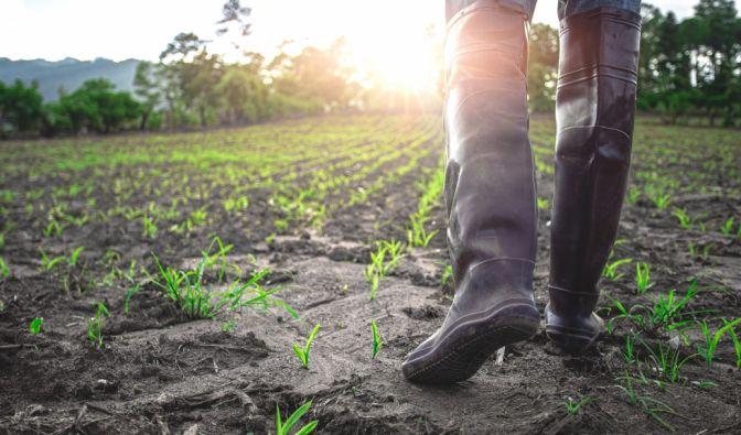 Was versprechen die Bauernregeln im Oktober? (Foto)