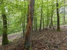 Borkenkäfer zerstören das Holz von Bäumen. (Foto)