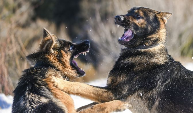 Blutige Hundeattacke in der Ukraine