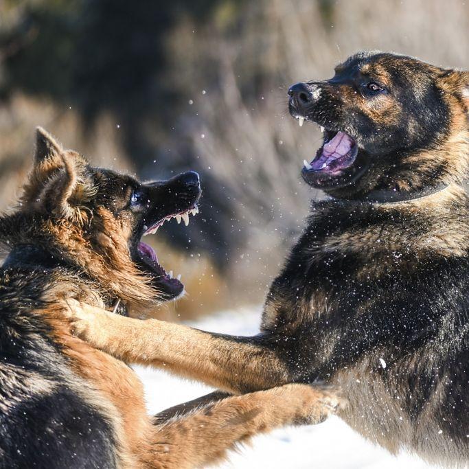 Hunde reißen kleinem Jungen (2) Genitalien und Anus heraus (Foto)