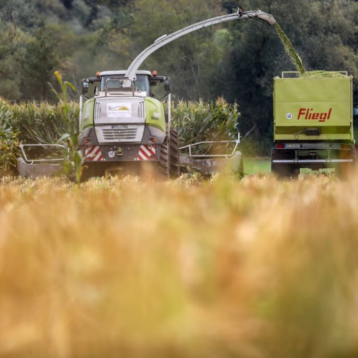 Horror-Fund bei der Ernte! Bauer findet Leiche im Feld (Foto)