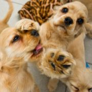 Mexikaner soll Hundewelpen an Schlangen verfüttert haben (Foto)