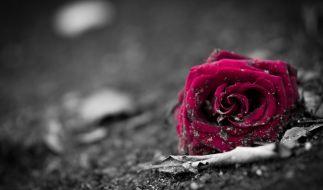 Bloggerin Tamara alias knallxbunt ist im Alter von nur 29 Jahren gestorben (Symbolbild). (Foto)