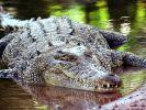 Ein Giganto-Kroko hat ein Hündchen verschlungen. (Foto)