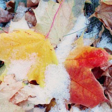 Wintereinbruch im Oktober? DAS prophezeit der 100-jährige Kalender (Foto)