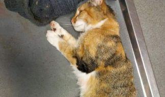 Ein Bild zeigt die schlimmen Verletzungen, die das Tier erilitten hat. (Foto)