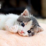Hirnschäden nach Missbrauch! Katzenbaby schwer behindert (Foto)