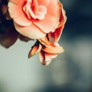 Krebs-Schock! Blogger stirbt mit 31 Jahren an seltenem Nebennierenkrebs (Foto)