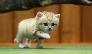 Promis und ihre Katzen am Weltkatzentag (Foto)