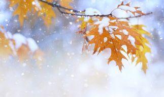 Am Wochenende sorgt Polarluft für kaltes Oktober-Wetter. (Foto)