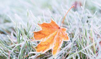 Wetterdienst warnt vor Luftfrost. (Foto)
