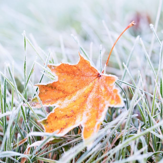 Achtung, Luftfrost! Regentief legt sich über Deutschland (Foto)