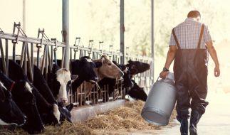 Über 730 Mal vergingen sich die Bauern an ihren Tieren. (Foto)