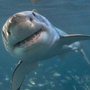 Baby-Albino-Hai mit nur einem Auge geht Fischern ins Netz (Foto)