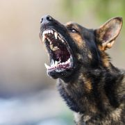 Horror-Angriff! Vierfach-Mutter (36) von Hunden totgebissen (Foto)