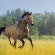 Tödlicher Tritt! Mädchen (10) von Pferd getreten - TOT (Foto)