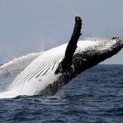 Beinahe von Wal gefressen! Frauen-Duo entgeht haarscharf dem Tod (Foto)